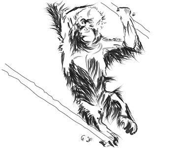 Orang-Utan Baby 3 von Go van Kampen