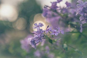 Blumen Teil 197 von Tania Perneel