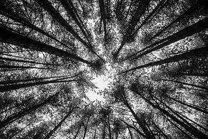 Bomen in de winter van Sebastiaan Bosveld