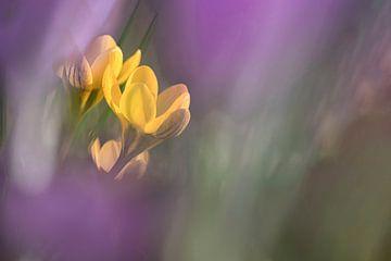 Gelb in Violett von Yvon NL