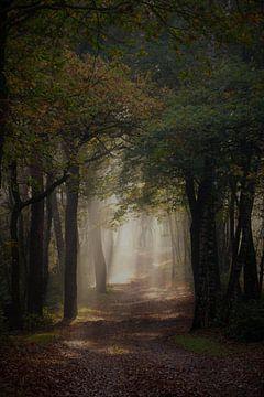 Lichtspel tussen de bomen van Marieke Peters-Brugmans