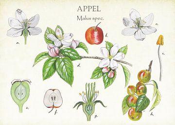 Appelboom van Jasper de Ruiter