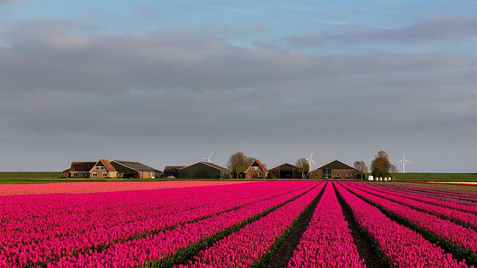 Tulpen voor de boerderij van Bram van Broekhoven