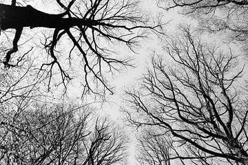 Boomtakken tegen hemel van Luis Boullosa