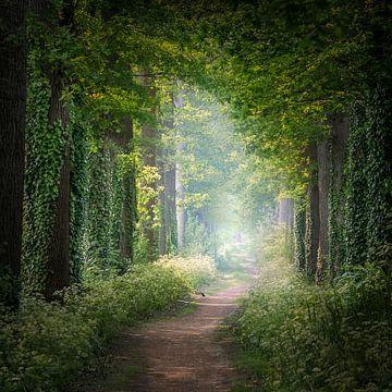 """""""Sommerwald"""" von Karel Ton"""
