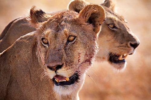 leeuwen sur Paul Jespers