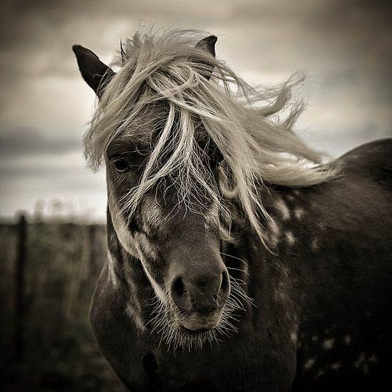 The blonde van Michel Derksen
