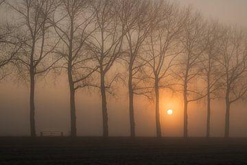 Bomenrij in de mist van Moetwil en van Dijk - Fotografie