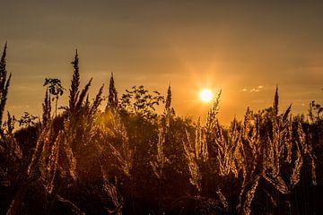 Gräser im Sonnenuntergang von Annett Mirsberger