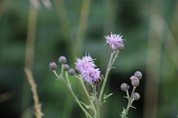 Blume auf dem Feld von Joran Keij