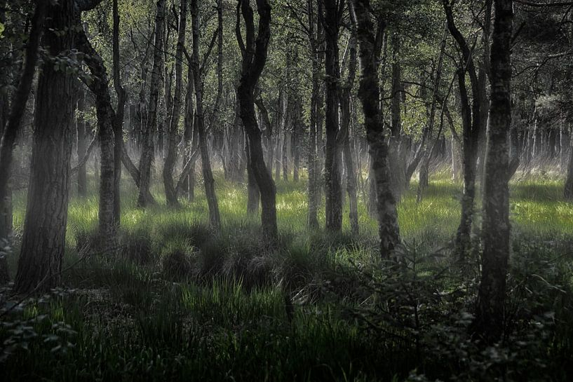 mystical forest van Joachim G. Pinkawa