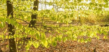 Fris jong groen aan de bomen von Tony Buijse