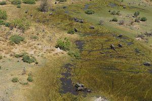 Olifanten in vogelvlucht
