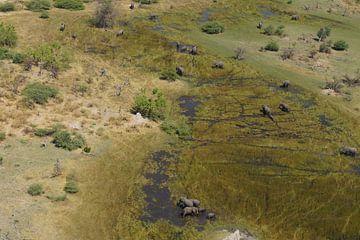 Olifanten in vogelvlucht van Erna Haarsma-Hoogterp