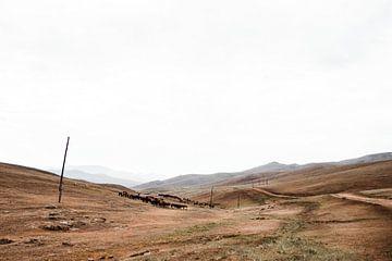 Mongoolse kudde geiten en paarden door de lege heuvels   Documentaire Fotografie van Holly Klein Oonk