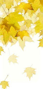 Esdoorn bladeren van Fionna Bottema