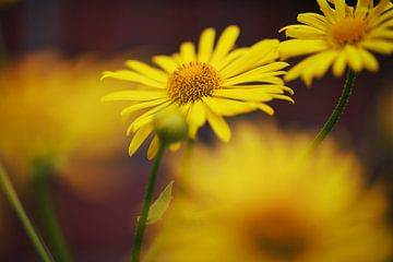 Blüten von Foto Oger