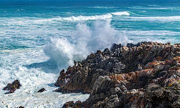 Die zerklüftete Küste Südafrikas von Discover Dutch Nature