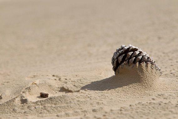 Dennenappel half bedolven onder het zand