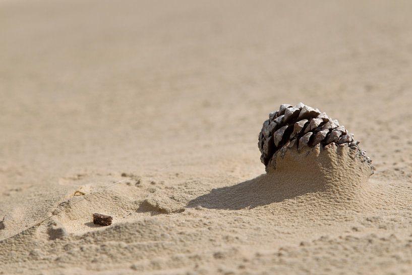 Dennenappel half bedolven onder het zand van Jani Moerlands