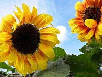 Zonnebloem van Jellie van Althuis