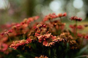 fleurs partie 213 sur Tania Perneel