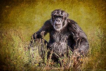 Alter Schimpanse im Gras (Gemälde) von Art by Jeronimo