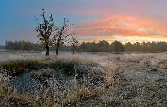 Mooie winterse ochtend in Nederland van Jos Pannekoek