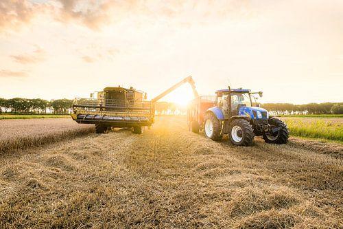 Zonsondergang bij het Tarwe oogsten