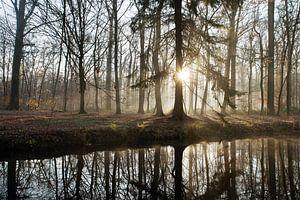 zon en mist in het bos van