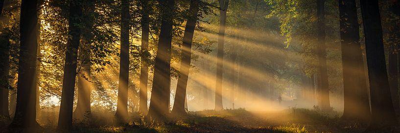 Gouden ochtendlicht van Edwin Mooijaart