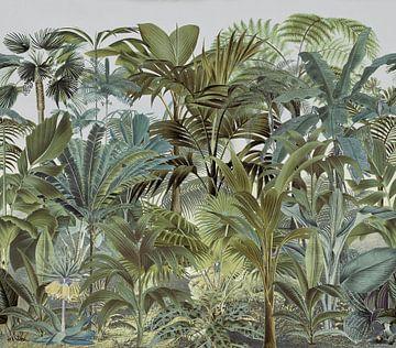 In het tropisch regenwoud van Andrea Haase