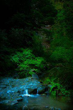 Wasser im Dschungel auf Madeira von jonathan Le Blanc