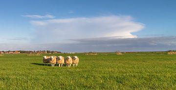 Sheep nr. 5 von Nicole Nagtegaal