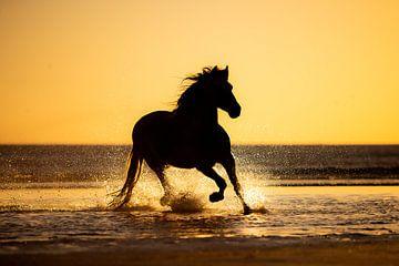 Silhouette eines Pferdes am Strand von Lotte van Alderen