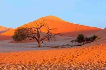 Acacia Namib Naukluft duinen, Sossusvlei van Inge Hogenbijl