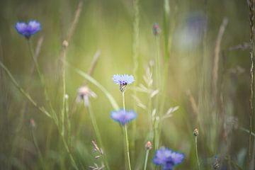 Blumen von Elke De Proost