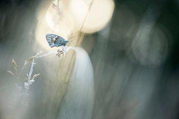 Ich träumte, ich sei ein Schmetterling von Bob Daalder