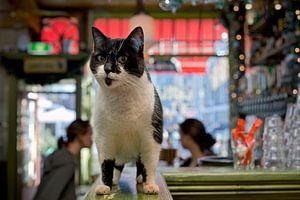 Cafékat, Amsterdam Nieuwmarkt