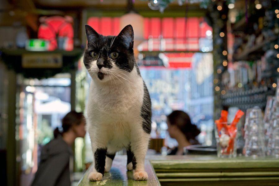 Cafékat, Amsterdam Nieuwmarkt van Robert van Willigenburg