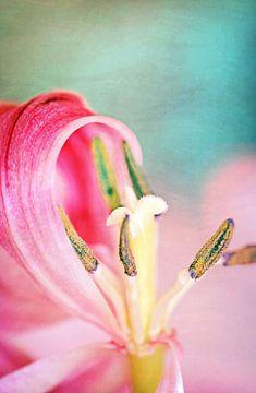 Blütenstempel  von Roswitha Lorz
