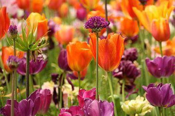 Blumen, die wunderschön blühen. von Jennifer Hendriks