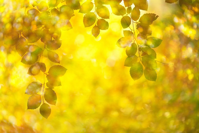 Herfst van Francis Dost