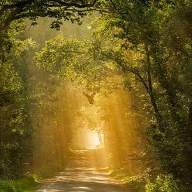 Der beleuchtete Wald von Lars van de Goor