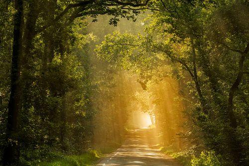 Der beleuchtete Wald
