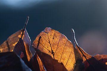 goldene Blätter von Tania Perneel