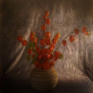 Stillleben mit Lampionblume von Herman Peters