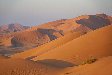 Woestijnduin: Oranje zandduinen in warm ochtendlicht, Oman van The Book of Wandering