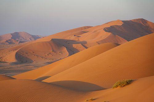 Woestijnduin: Oranje zandduinen in warm ochtendlicht, Oman