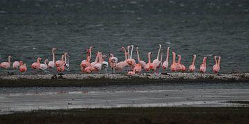 flamingo's 6 van Marloes van der Beek-Rietveld